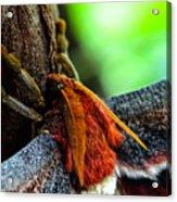 Large Moth Macro Acrylic Print