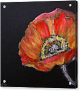 Large Poppy Acrylic Print