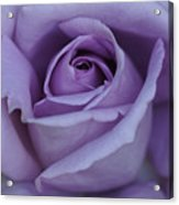 Large Purple Rose Center - 002 Acrylic Print