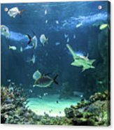Large Sawfish And Other Fishes Swimming In A Large Aquarium Acrylic Print