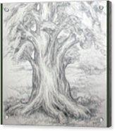 Large Shady Tree Acrylic Print