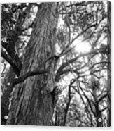 Large Tree Acrylic Print
