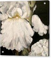 Large White Iris Acrylic Print