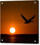 Large Wings Acrylic Print