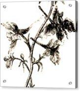Larkspur  Acrylic Print