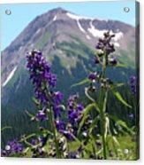 Larkspur Wildflowers Acrylic Print