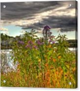 Last Flower Of Fall Acrylic Print