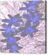 Last Frozen Flowers Acrylic Print