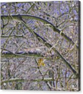 Last Leaf Of Winter Acrylic Print