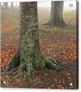 Last Leaves Of Autumn Acrylic Print