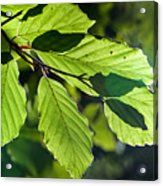Last Of The Summer Leaves Acrylic Print