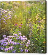 Last Rays Of Sun Light Wildflowers In Moraine Hills Sp Acrylic Print