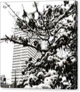 Last Snow Fall  Acrylic Print