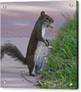 Last Squirrel Standing Acrylic Print