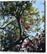 Late Afternoon Tree Silhouette With Bougainvileas II Acrylic Print