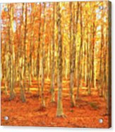 Late Autumn In Calabria Acrylic Print