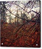 Late Autumn Morning Acrylic Print