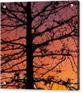 Late Autumn Sunset Acrylic Print