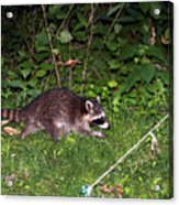 Late Night Visitor Acrylic Print