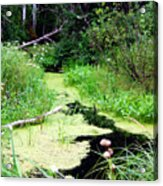 Late Summer At The Creek Acrylic Print