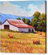 Late Summer Hay Acrylic Print