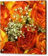 Late Summer Roses Acrylic Print