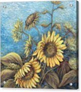 Late Sunflowers  Acrylic Print