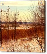 Late Winter at Emiquon Acrylic Print