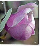 Lathrop California Acrylic Print
