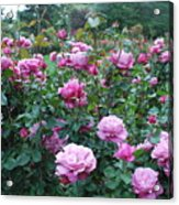 Laugerfeld Roses Acrylic Print