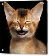Laughing Kitten  Acrylic Print