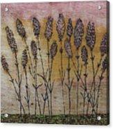 Lavandula Angustifolia II Acrylic Print