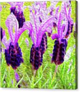 Lavender Abstract Acrylic Print