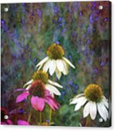 Lavender And Cones 1636 Idp_2 Acrylic Print