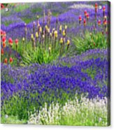 Lavender And Flowers Oh My Acrylic Print