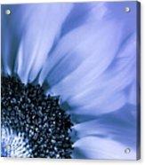 Lavender Blue Silk Acrylic Print