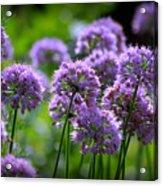 Lavender Breeze Acrylic Print