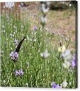 Lavender Butterflies Acrylic Print
