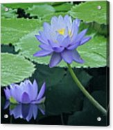Lavender Enchantment Acrylic Print