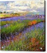 Lavender Field Acrylic Print by David Stribbling