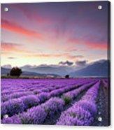 Lavender Field Acrylic Print by Evgeni Dinev Photography