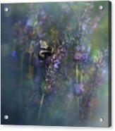 Lavender Field II Acrylic Print