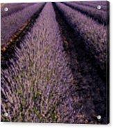 Lavender Field Provence France Acrylic Print