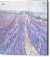 Lavender Fields Provence-france Acrylic Print