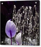 Lavender Flower At Fountain Acrylic Print