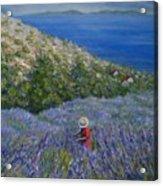 Lavender In Full  Bloom Acrylic Print