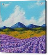 Lavender In Provence Acrylic Print