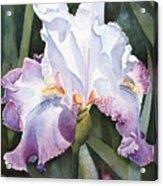 Lavender Light Acrylic Print