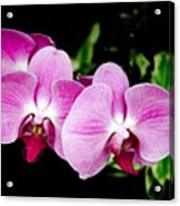 Lavender Orchids  Acrylic Print