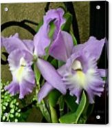 Lavender Orchids Acrylic Print